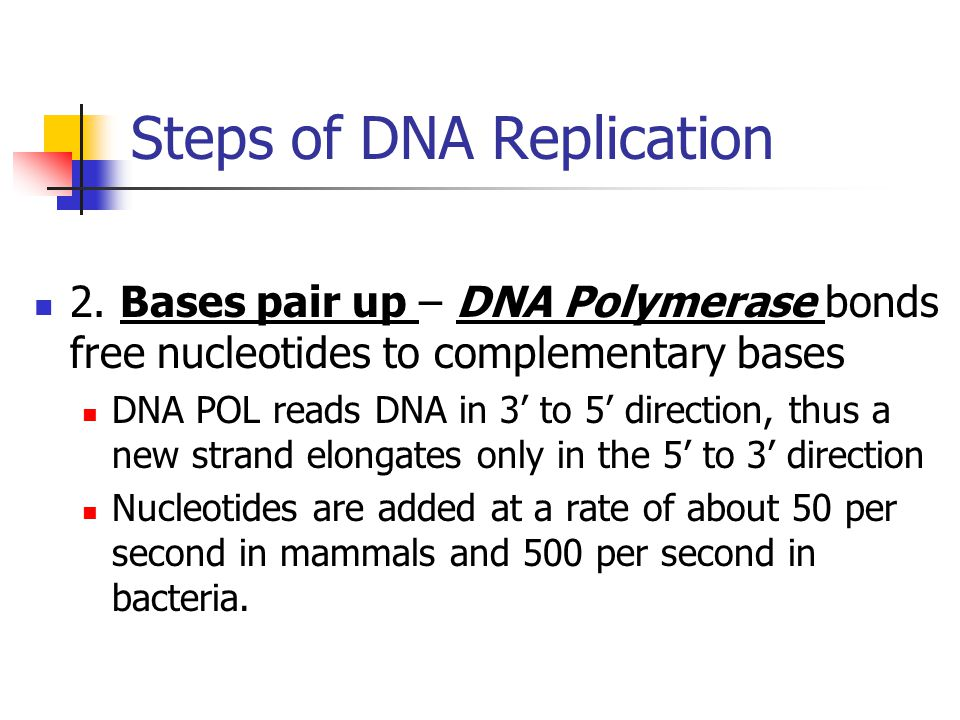 Steps of DNA Replication 2. Bases pair up – DNA Polymerase bonds free nucleotides to complementary bases DNA POL reads DNA in 3 to 5 direction, thus a