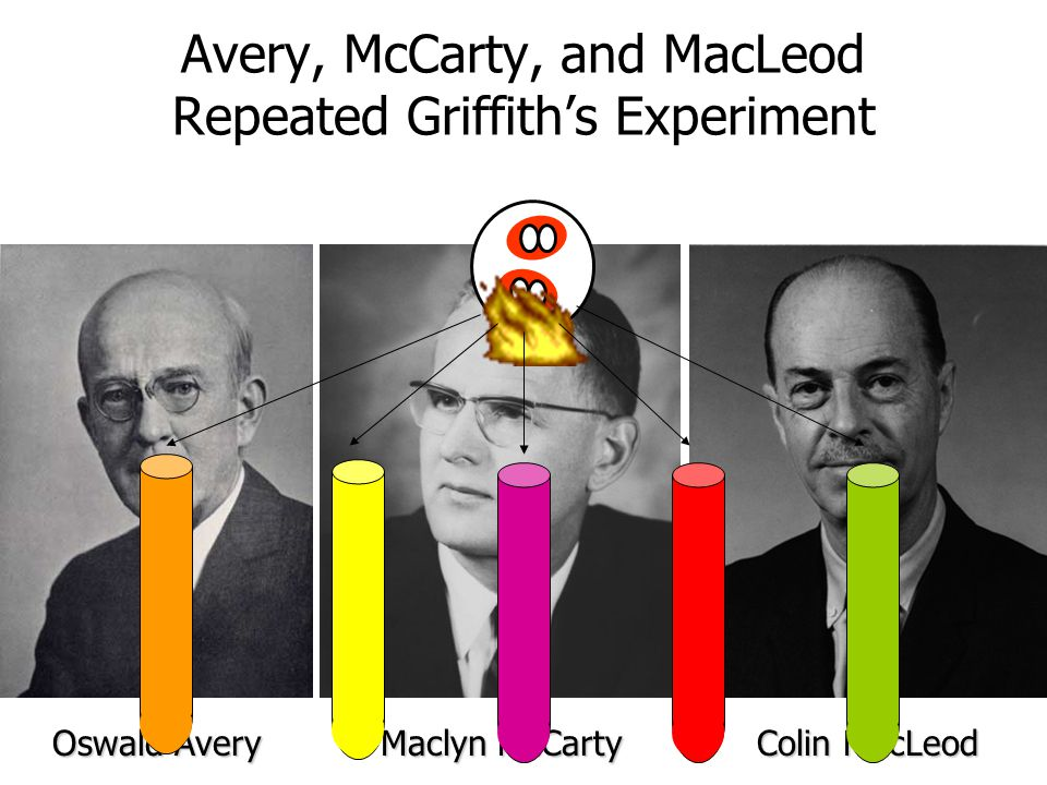 Avery, McCarty, and MacLeod Repeated Griffiths Experiment Oswald Avery Maclyn McCarty Colin MacLeod