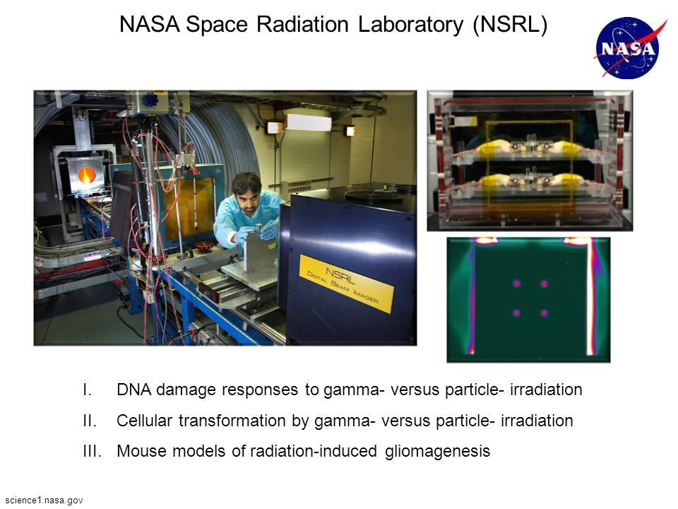 NASA Space Radiation Laboratory (NSRL) I.DNA damage responses to gamma- versus particle- irradiation II.Cellular transformation by gamma- versus parti