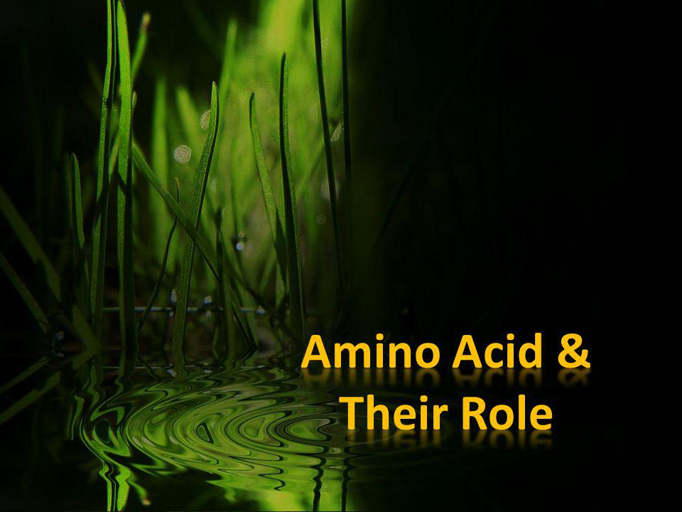 AMINO ACID Amino acids are critical to life, and have many functions in metabolism.