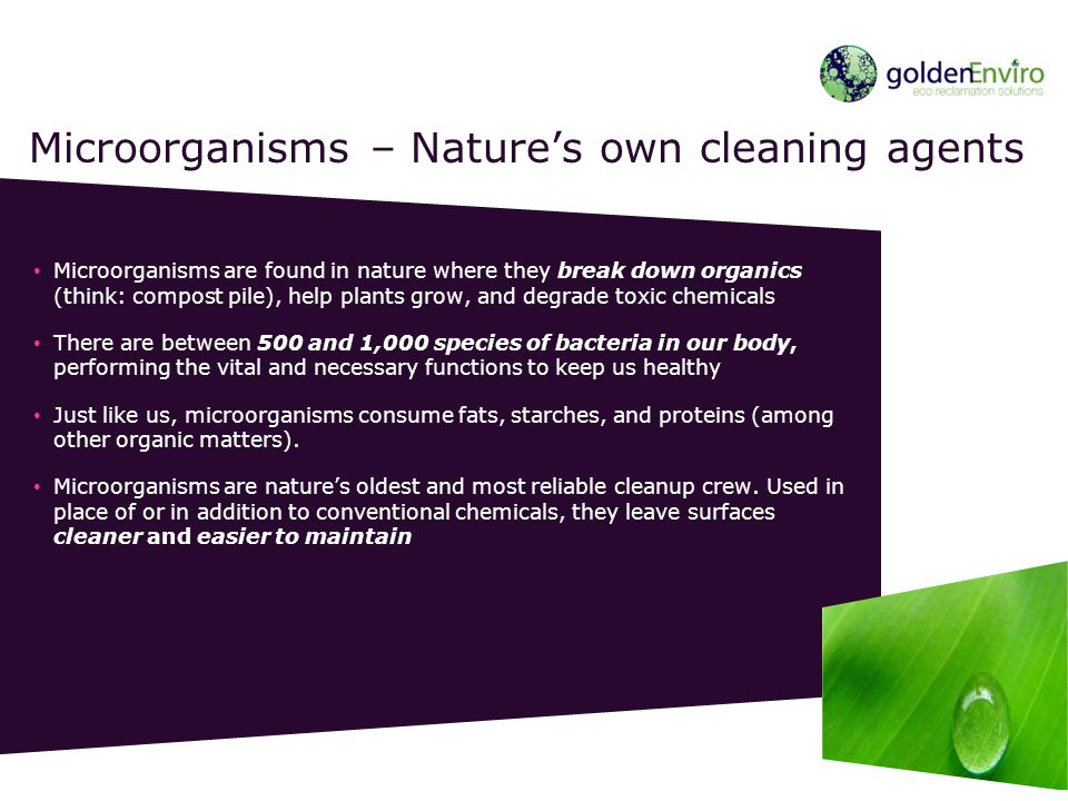 Microorganisms are found in nature where they break down organics (think: compost pile), help plants grow, and degrade toxic chemicals There are betwe