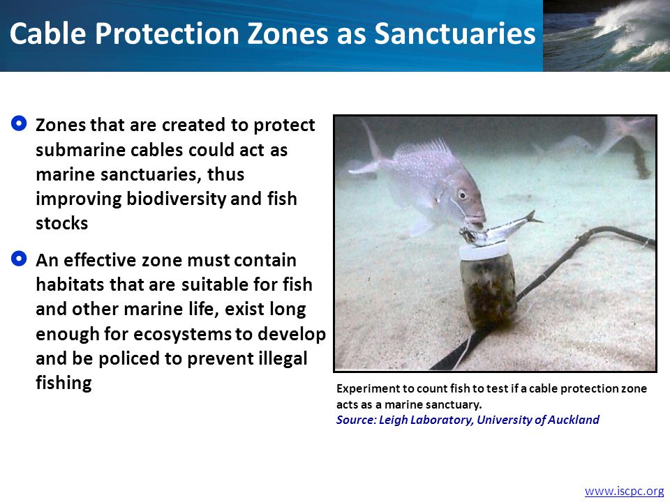www.iscpc.org Cable Protection Zones as Sanctuaries Zones that are created to protect submarine cables could act as marine sanctuaries, thus improving