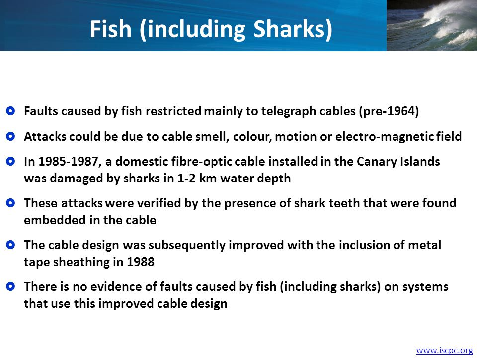 www.iscpc.org Fish (including Sharks) Faults caused by fish restricted mainly to telegraph cables (pre-1964) Attacks could be due to cable smell, colour, motion or electro-magnetic field In 1985-1987, a domestic fibre-optic cable installed in the Canary Islands was damaged by sharks in 1-2 km water depth These attacks were verified by the presence of shark teeth that were found embedded in the cable The cable design was subsequently improved with the inclusion of metal tape sheathing in 1988 There is no evidence of faults caused by fish (including sharks) on systems that use this improved cable design