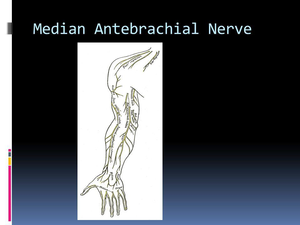 Median Antebrachial Nerve