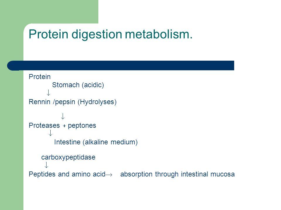 Protein digestion metabolism.