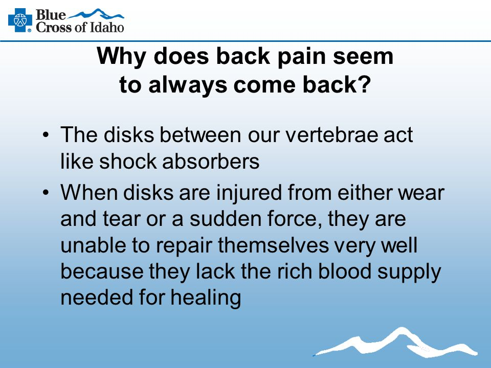 Why does back pain seem to always come back? The disks between our vertebrae act like shock absorbers When disks are injured from either wear and tear
