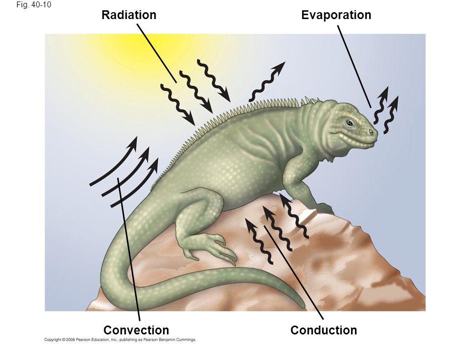 Fig. 40-10 RadiationEvaporation ConvectionConduction