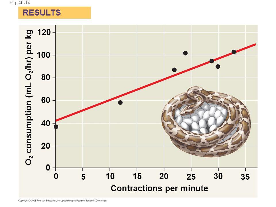 Fig. 40-14 RESULTS Contractions per minute O 2 consumption (mL O 2 /hr) per kg 0 0 20 1510 525 30 35 40 60 80 100 120