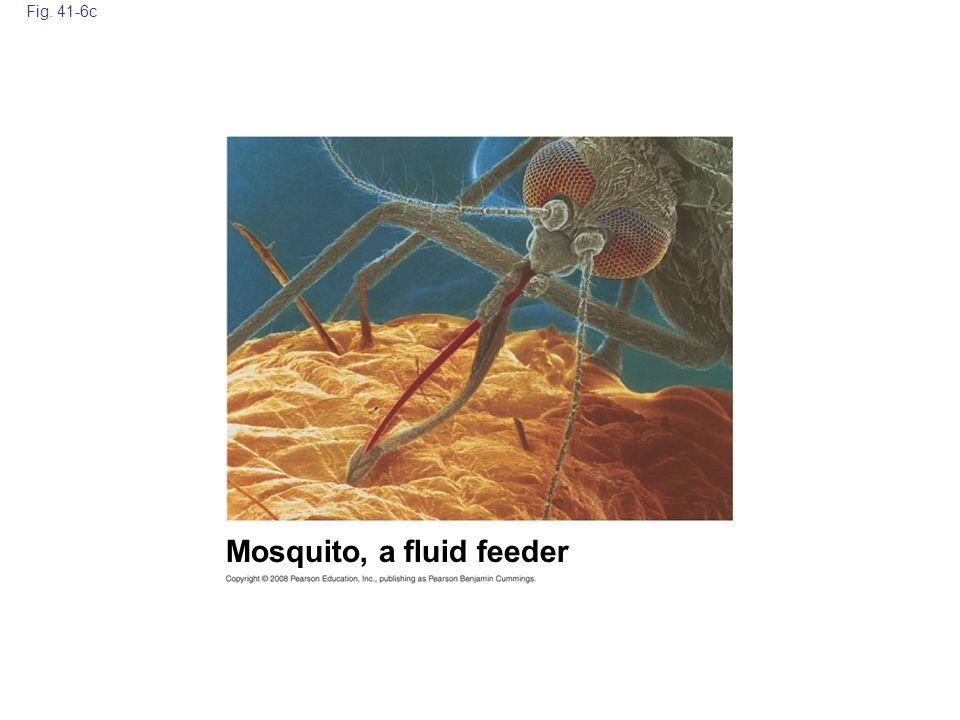 Fig. 41-6c Mosquito, a fluid feeder