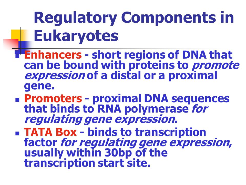 Regulatory Components in Eukaryotes Enhancers - short regions of DNA that can be bound with proteins to promote expression of a distal or a proximal g