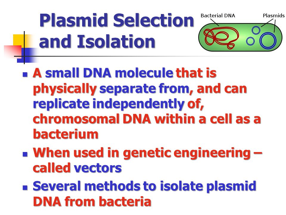 Plasmid Selection and Isolation A small DNA molecule that is physically separate from, and can replicate independently of, chromosomal DNA within a ce