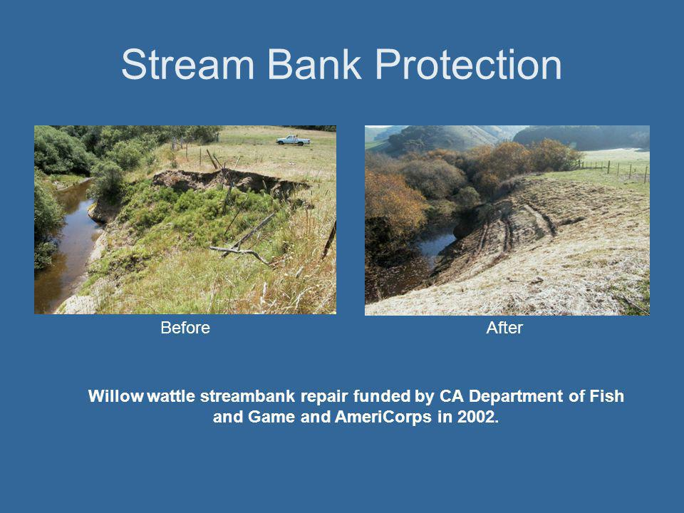 Stream Bank Protection BeforeAfter Willow wattle streambank repair funded by CA Department of Fish and Game and AmeriCorps in 2002.