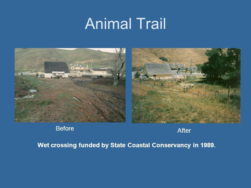 Animal Trail Before After Wet crossing funded by State Coastal Conservancy in 1989.