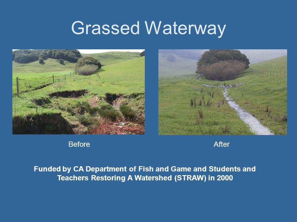 Critical Area Planting BeforeAfter Stream restoration funded by State Coastal Conservancy in 1996.
