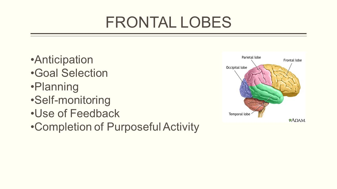 FRONTAL LOBES Anticipation Goal Selection Planning Self-monitoring Use of Feedback Completion of Purposeful Activity