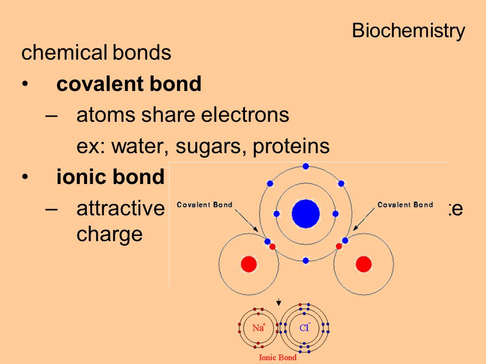 chemical bonds covalent bond –atoms share electrons ex: water, sugars, proteins ionic bond –attractive force between ions of opposite charge Biochemistry