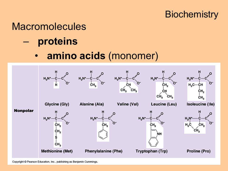 Macromolecules –proteins amino acids (monomer) Biochemistry