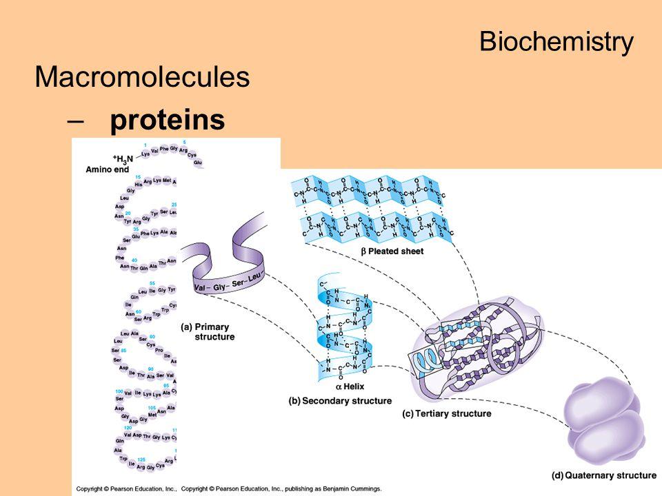 Macromolecules –proteins Biochemistry
