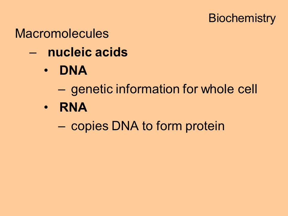 Macromolecules –nucleic acids DNA –genetic information for whole cell RNA –copies DNA to form protein Biochemistry