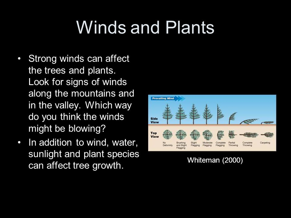 Winds and Plants Strong winds can affect the trees and plants. Look for signs of winds along the mountains and in the valley. Which way do you think t