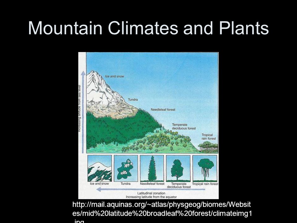 http://mail.aquinas.org/~atlas/physgeog/biomes/Websit es/mid%20latitude%20broadleaf%20forest/climateimg1.jpg Mountain Climates and Plants