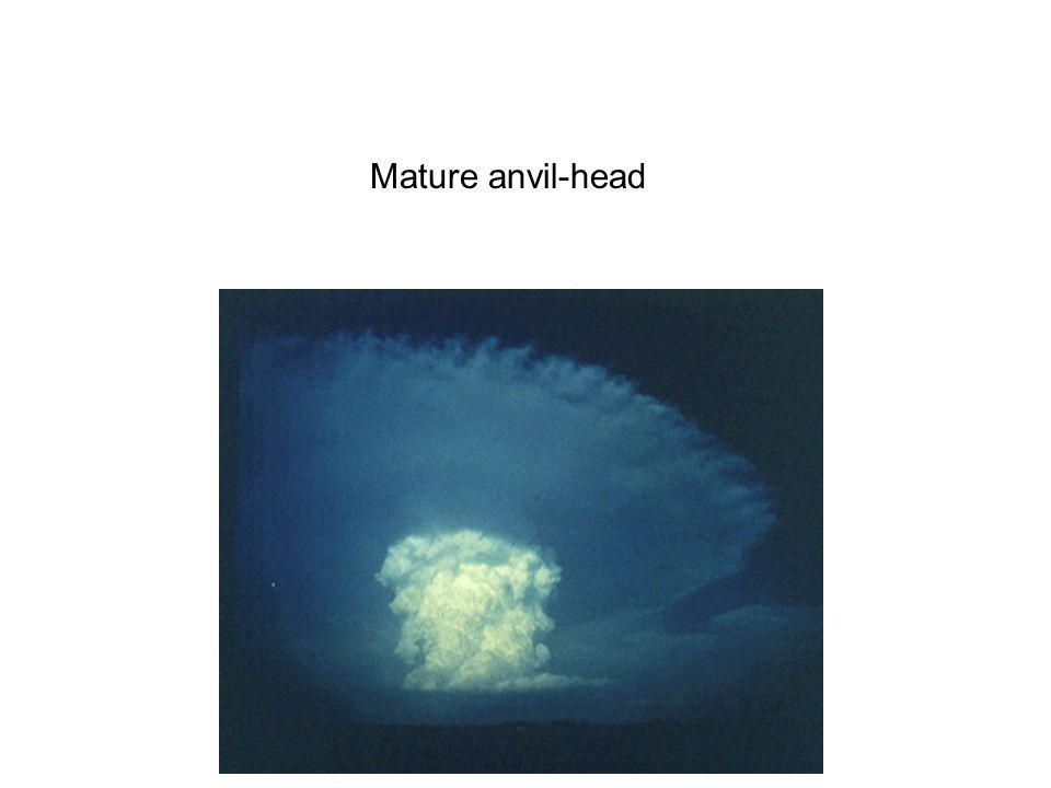 Mature anvil-head