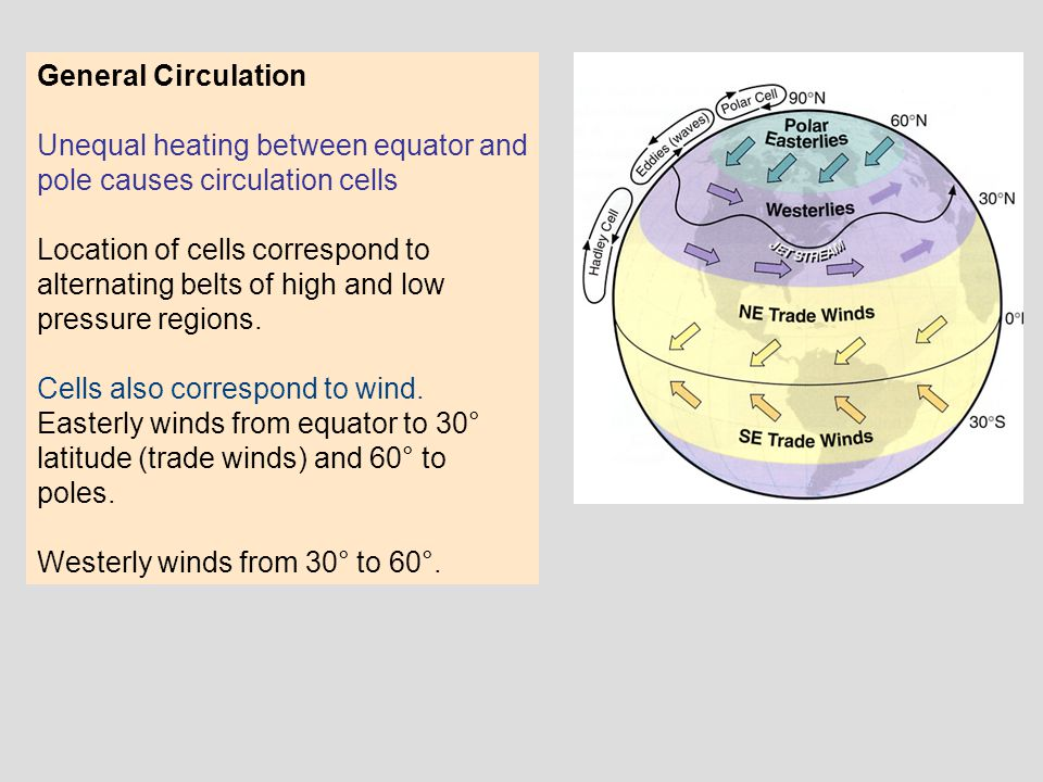 General Circulation Unequal heating between equator and pole causes circulation cells Location of cells correspond to alternating belts of high and lo