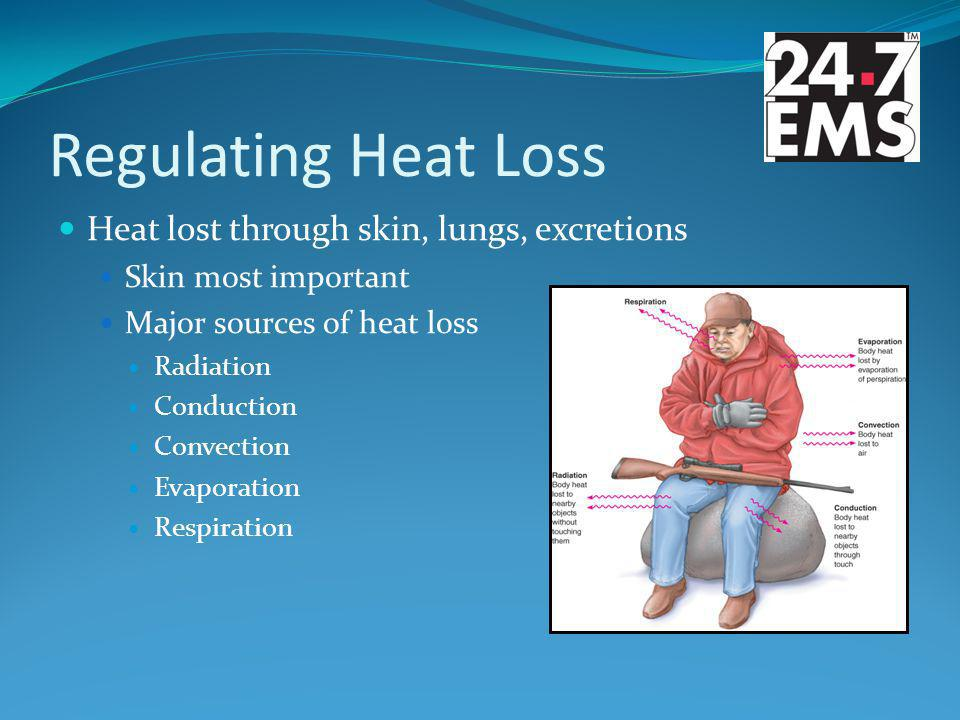 Regulating Heat Loss Heat lost through skin, lungs, excretions Skin most important Major sources of heat loss Radiation Conduction Convection Evaporation Respiration