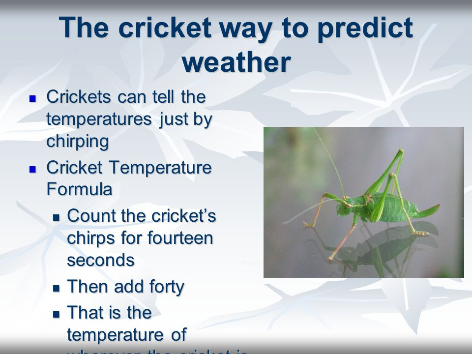 The cricket way to predict weather Crickets can tell the temperatures just by chirping Cricket Temperature Formula Count the crickets chirps for fourt