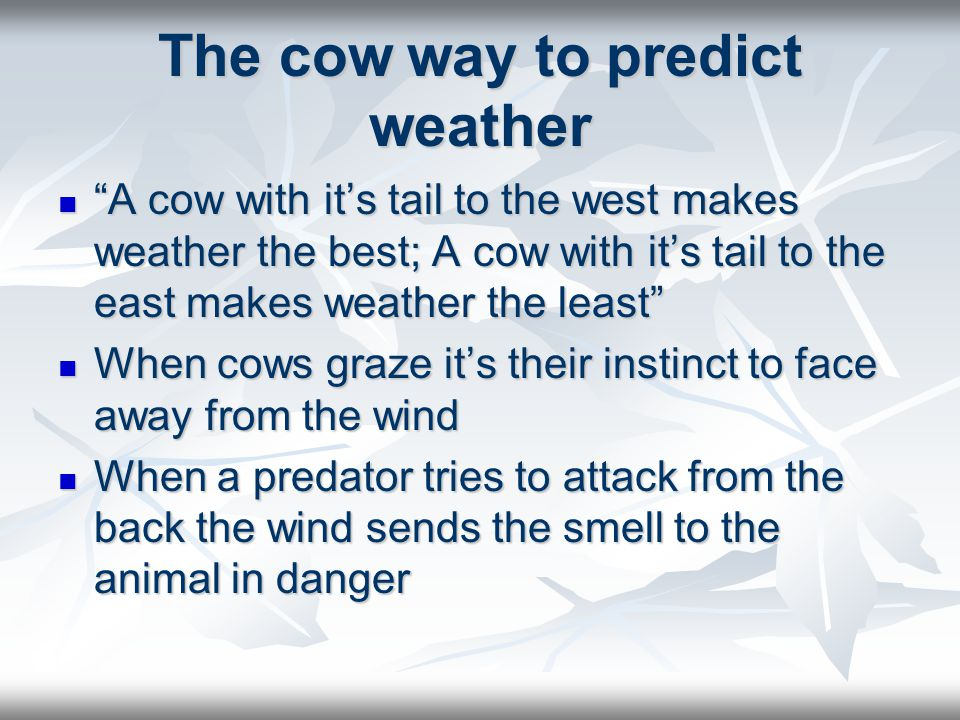 The cow way to predict weather East winds usually bring rain in the northern hemisphere and West winds usually bring fair weather in the north hemisphere.