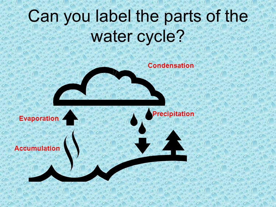 Can you label the parts of the water cycle? Condensation Precipitation Accumulation Evaporation
