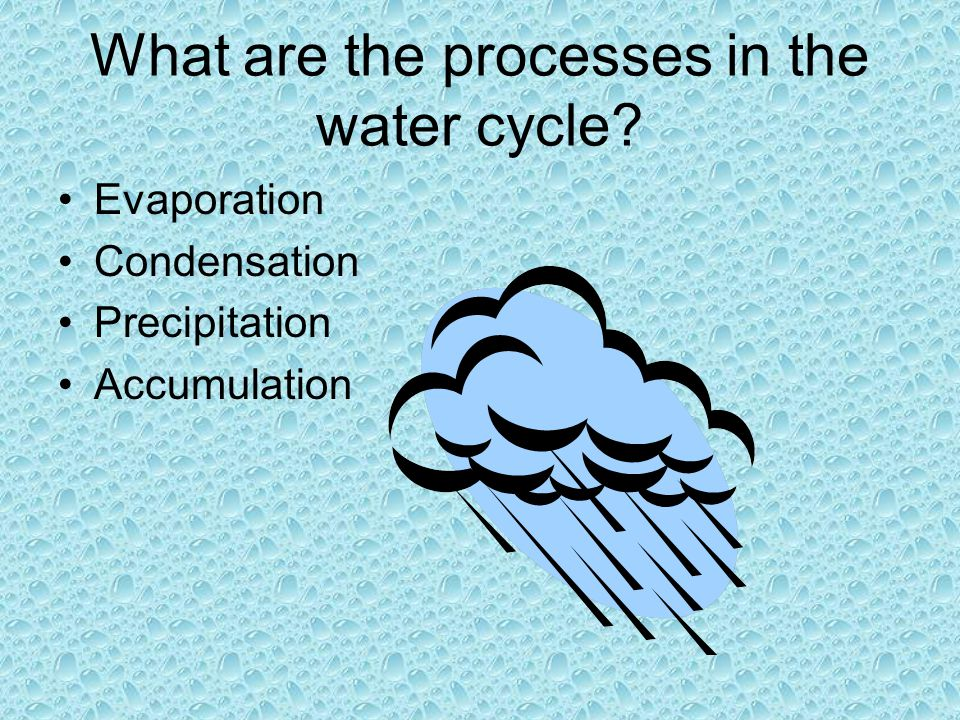 What are the processes in the water cycle? Evaporation Condensation Precipitation Accumulation