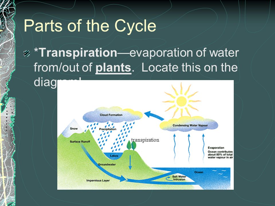 Parts of the Cycle Evaporation EvaporationWater going from a liquid to a gas (gains energy from the sun)