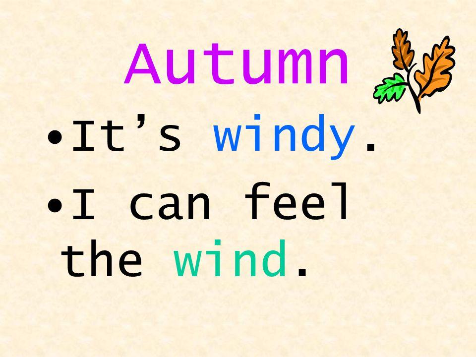 wind Windy