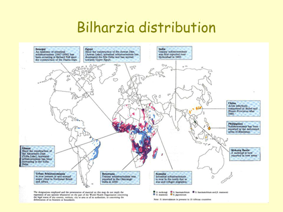 Bilharzia distribution