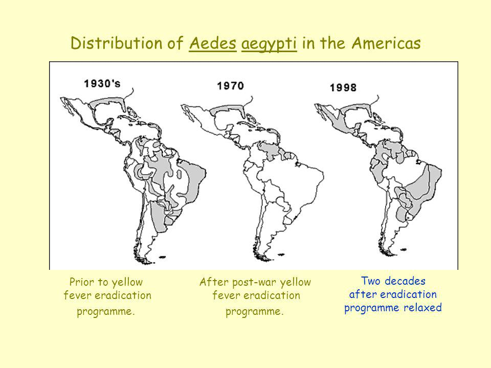 1995 Distribution of Aedes aegypti in the Americas After post-war yellow fever eradication programme. Two decades after eradication programme relaxed