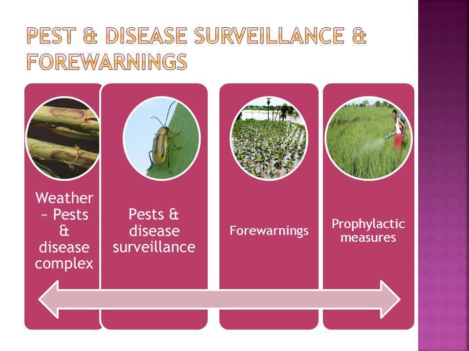 Weather ~ Pests & disease complex Pests & disease surveillance Forewarnings Prophylactic measures