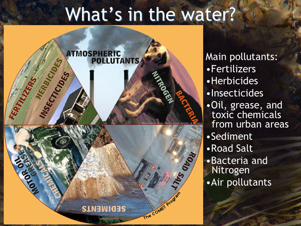 Whats in the water? Main pollutants: Fertilizers Herbicides Insecticides Oil, grease, and toxic chemicals from urban areas Sediment Road Salt Bacteria