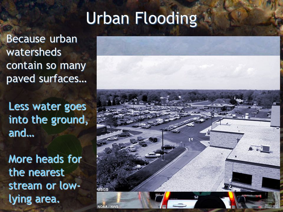 Urban Flooding Because urban watersheds contain so many paved surfaces… Less water goes into the ground, and… More heads for the nearest stream or low- lying area.