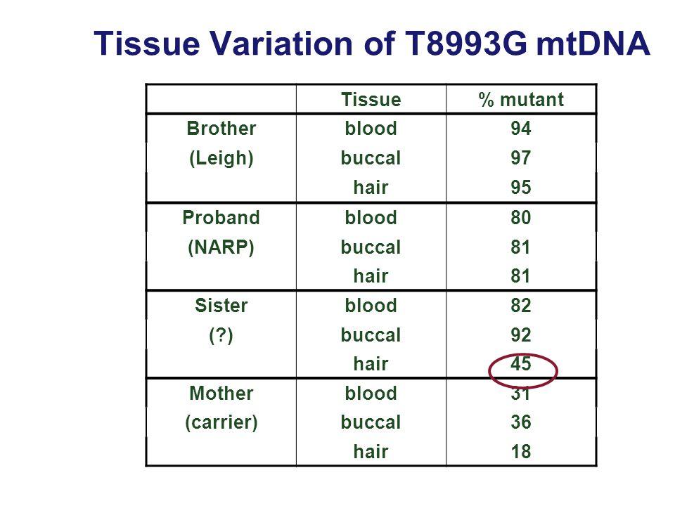 Tissue% mutant Brotherblood94 (Leigh)buccal97 hair95 Probandblood80 (NARP)buccal81 hair81 Sisterblood82 (?)buccal92 hair45 Motherblood31 (carrier)bucc
