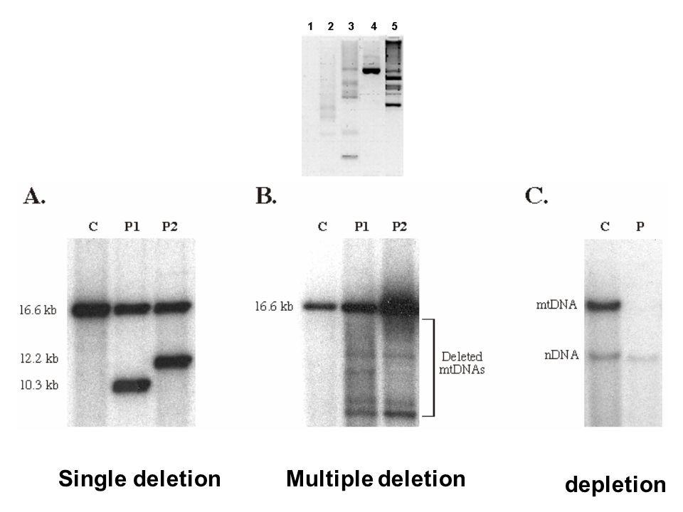 Single deletionMultiple deletion depletion