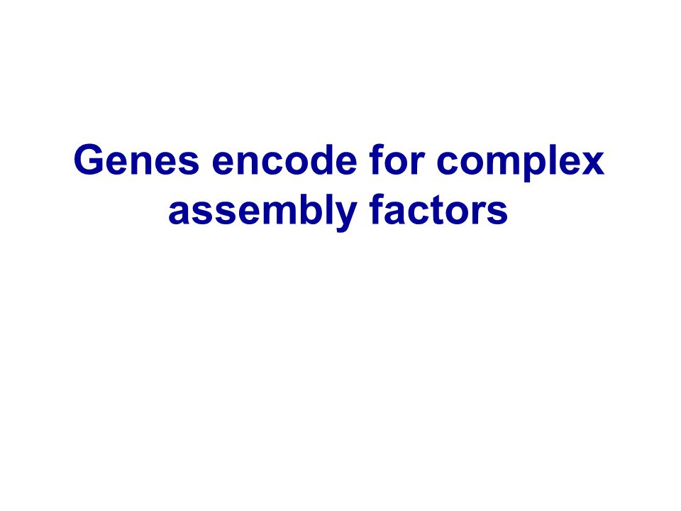 Genes encode for complex assembly factors