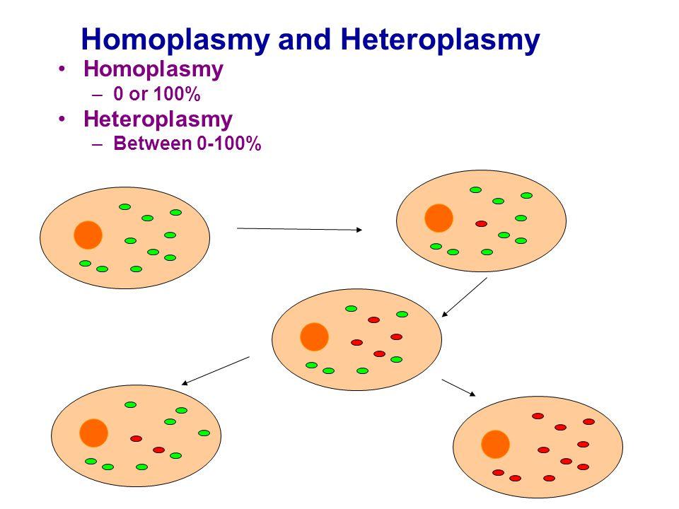 Homoplasmy –0 or 100% Heteroplasmy –Between 0-100% Homoplasmy and Heteroplasmy