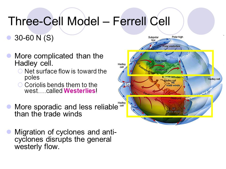 Three-Cell Model – Ferrell Cell 30-60 N (S) More complicated than the Hadley cell. Net surface flow is toward the poles Coriolis bends them to the wes