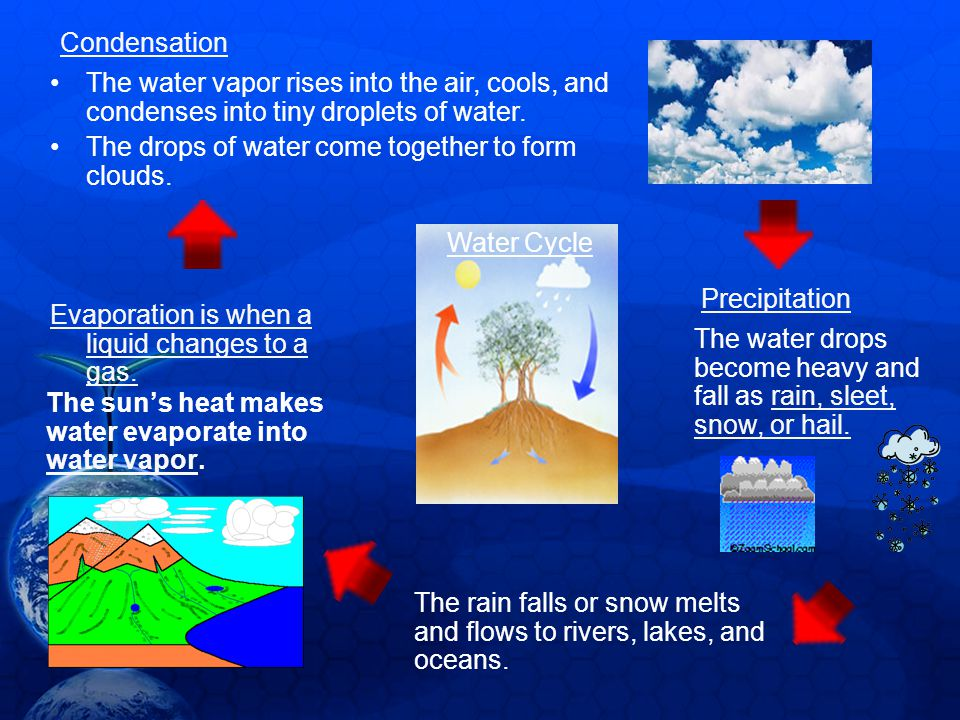 The suns heat makes water evaporate into water vapor. The water vapor rises into the air, cools, and condenses into tiny droplets of water. The drops