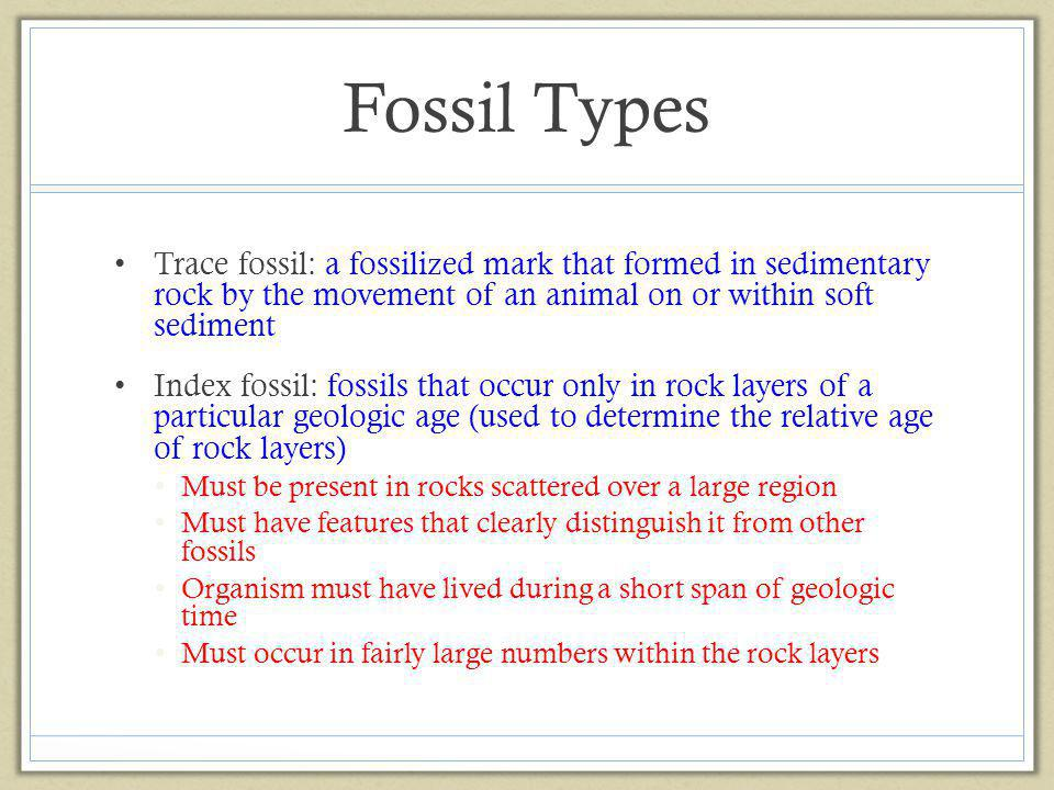 Fossil Types Trace fossil: a fossilized mark that formed in sedimentary rock by the movement of an animal on or within soft sediment Index fossil: fos