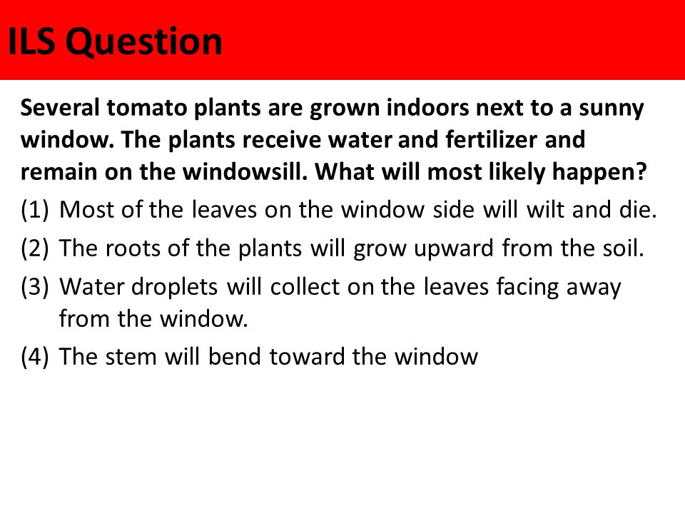 ILS Question Several tomato plants are grown indoors next to a sunny window. The plants receive water and fertilizer and remain on the windowsill. Wha