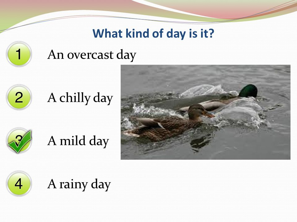 What kind of day is it? A chilly day A mild day A rainy day An overcast day