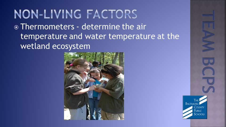 Thermometers - determine the air temperature and water temperature at the wetland ecosystem