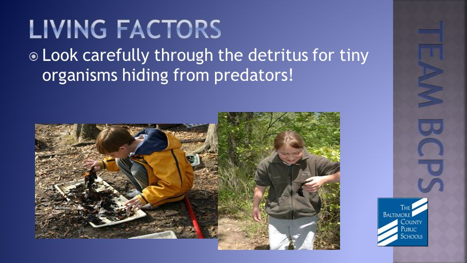 Look carefully through the detritus for tiny organisms hiding from predators!